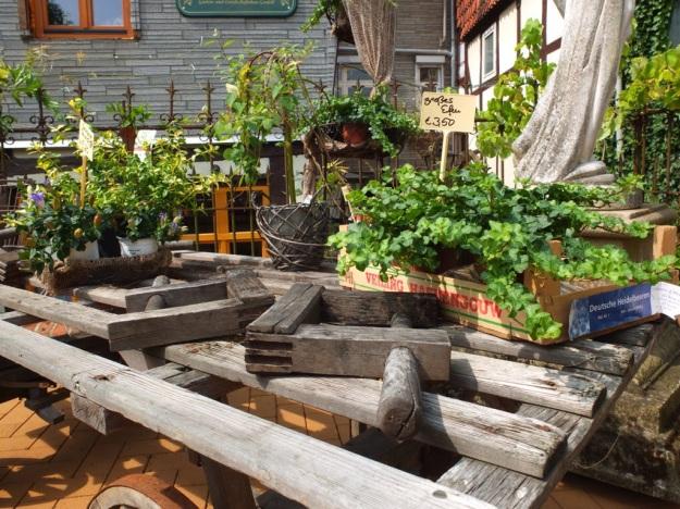 Pflanzen zu Verkauf im alten Stadthause