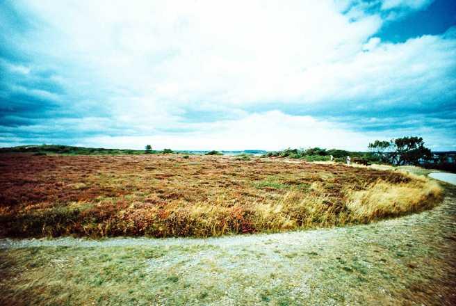 Heather in Christchurch